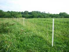 White ProLine posts used with a horse fence